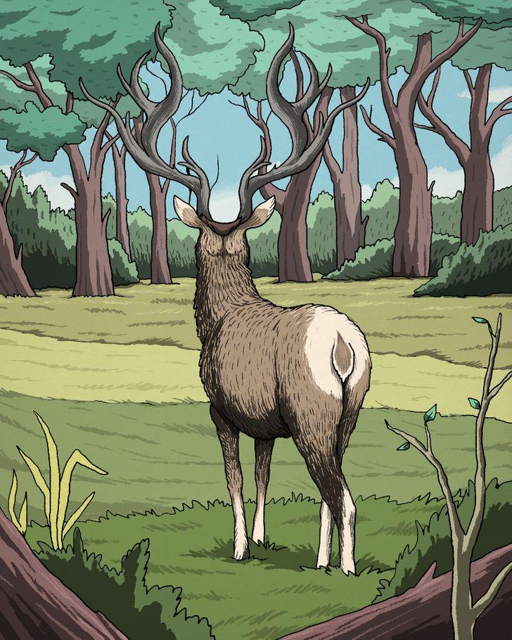 Látod a szarvasra vadászó pumát? - chiptuning