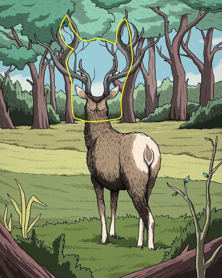 6. Megoldás: Látod a szarvasra vadászó pumát?